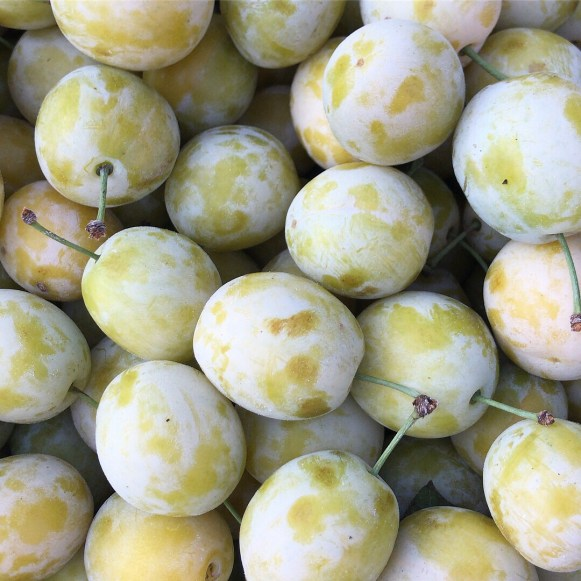 A close up of greengages from above