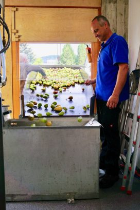 Pears falling down a slide in through a window in a fruit-pressing business