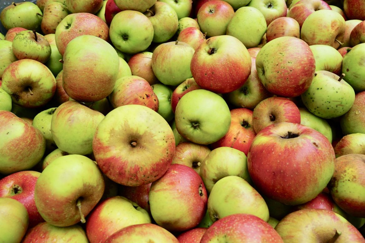 Lots and lots of red-green apples