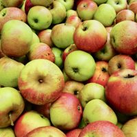 The Swabian Orchard Paradise: apples, pears and enormous plum tarts