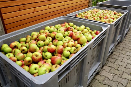 Lots of apples in very large plastic crates