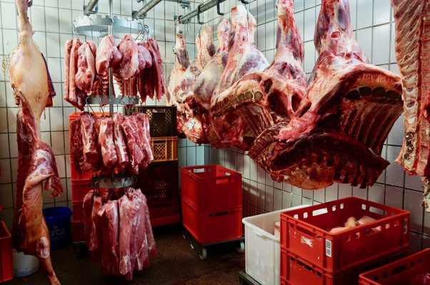 Animal carcasses hanging from the ceiling in a walk-in fridge