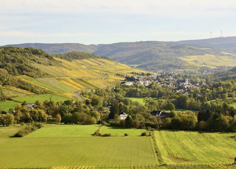Vineyard views in the Mosel wine region
