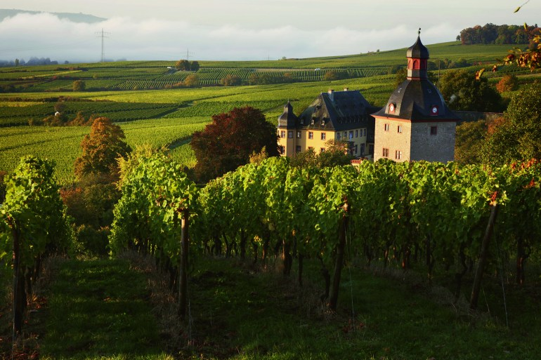 View of Schloss Vollrads from its surrounding vineyards