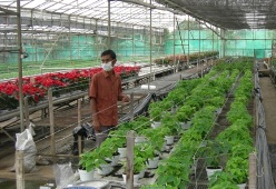 Working in Indonesian floriculture