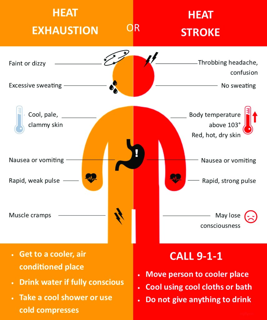 Surviving the Heat: Safely 6