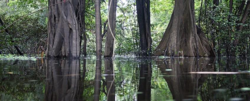 Vazara Flooded forest. Brazil