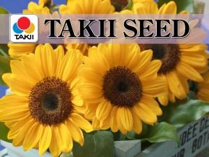 Takii Seed test 1 - Takii Seed test