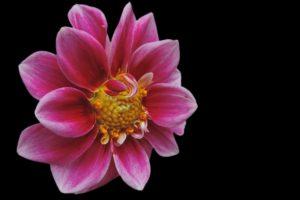 laboratorio scuola bullismo e cyberbullismo messaggio dei fiori