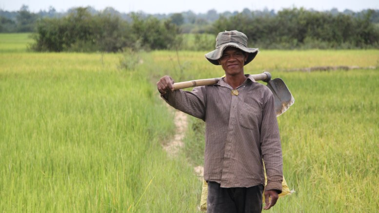 Cambodian Rice Farmer in a field