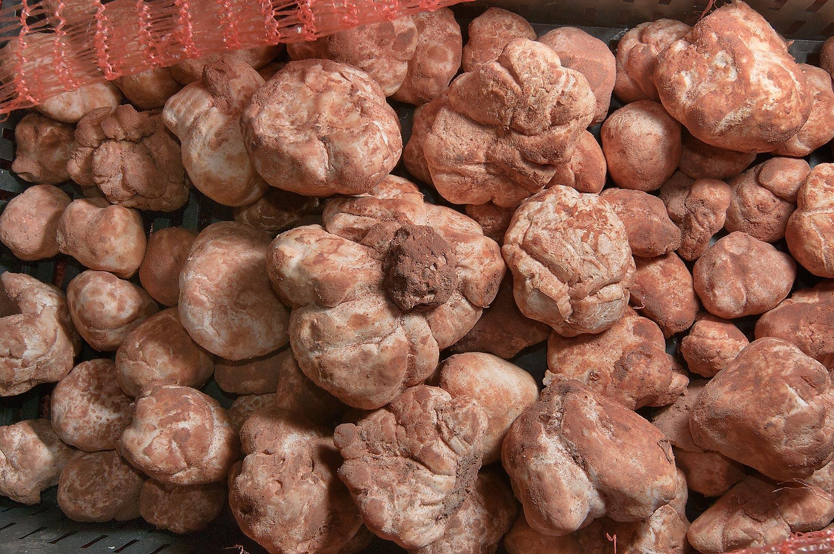 Photo 1016-13: Desert truffles (faqah) in Omani Market ...