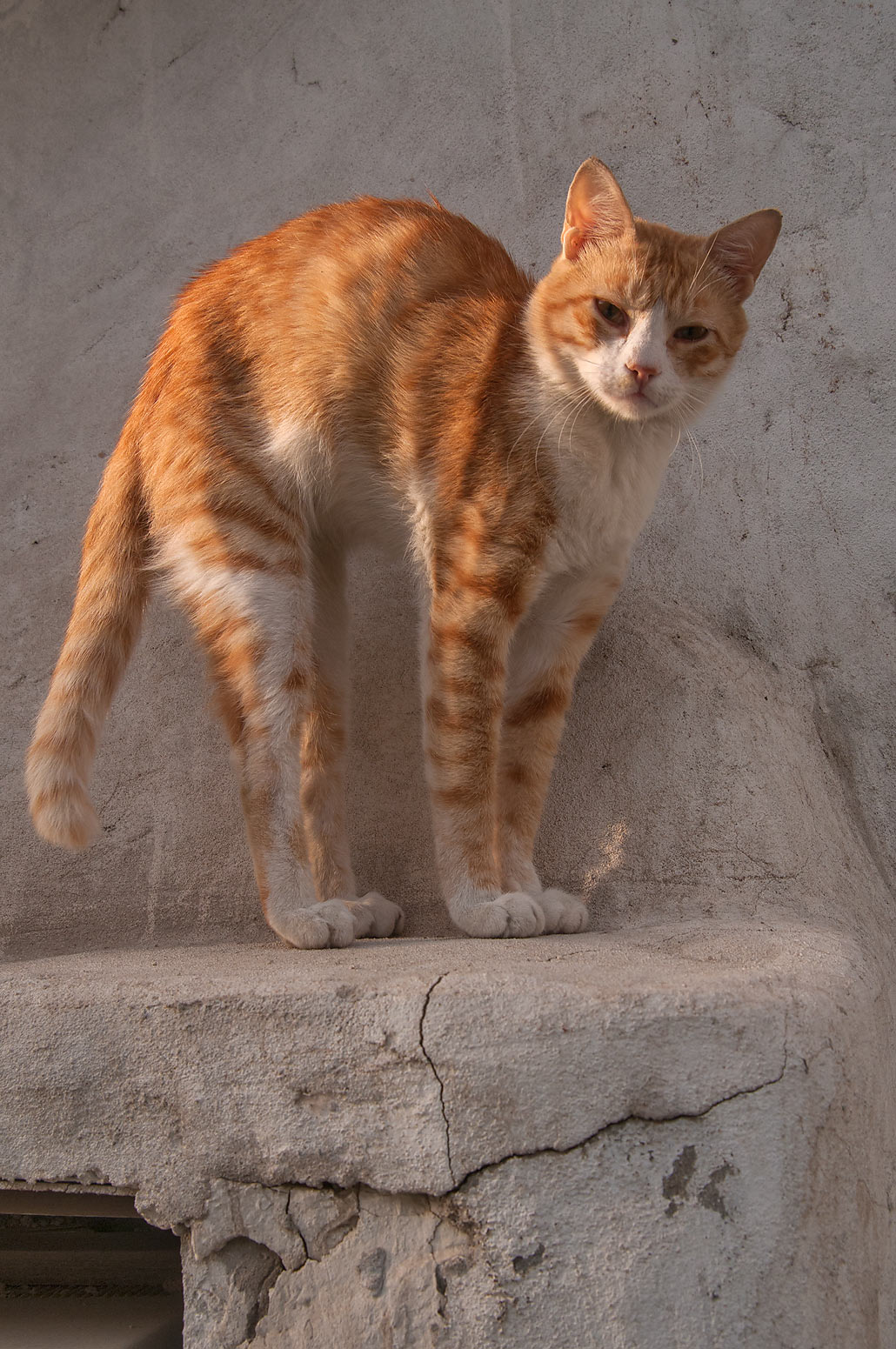Photo 1206 19 Stretching Brown Cat Near Al Jassasiya St