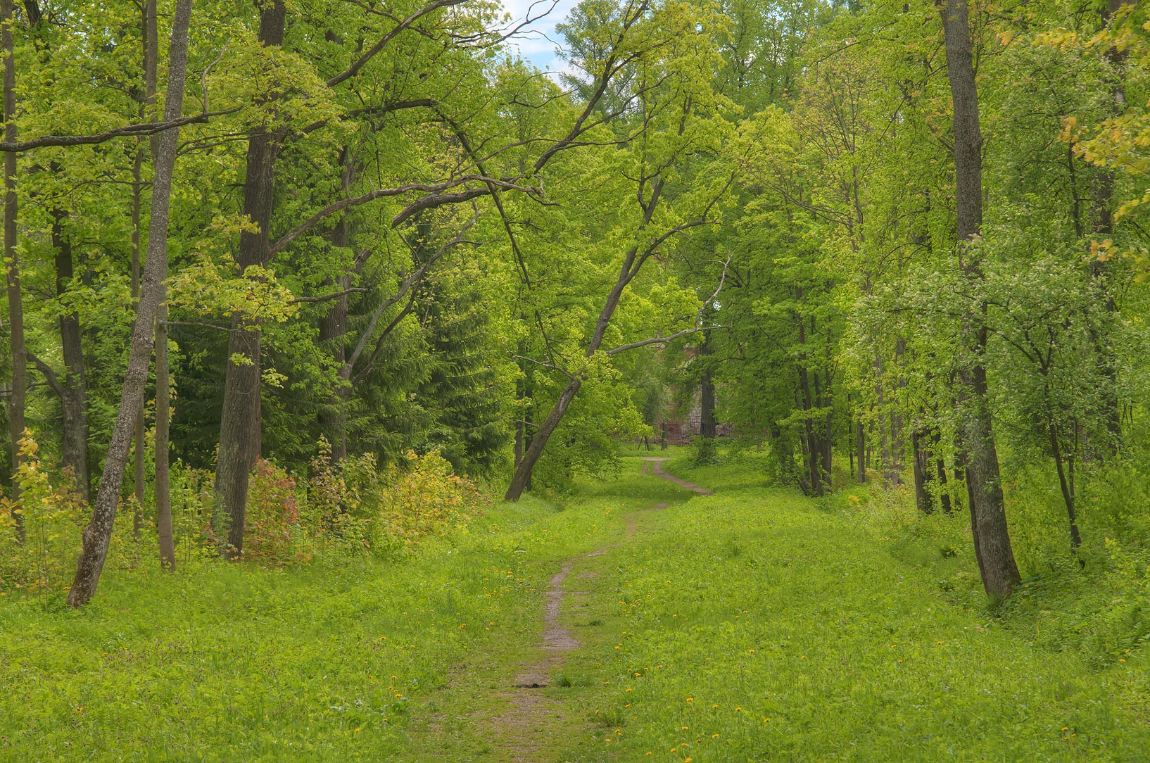 Image result for grassy path