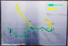 Map (Detail)