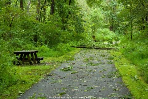 Fallen tree across Struble Trail