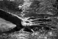 Creek Claw - East Branch Brandywine Creek (B&W)