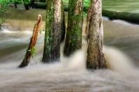 Flooded Trees - Tropical Storm, Nicole - Hibernia Park (10/1/2010)