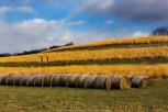 Rolled Hay Bails in the Fields (2010)
