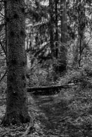 Trails 01
