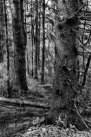 Trails 02