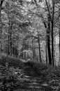 Trails 03
