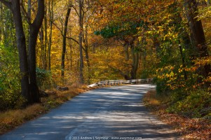 A drive through the woods - A Fall drive in White Clay Creek Preserve area of Chester County, PA.