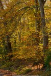 Looking into the colors - A Fall drive in White Clay Creek Preserve area of Chester County, PA.