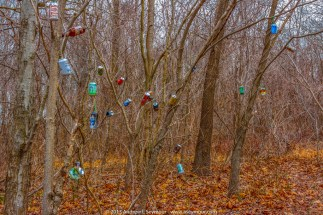 Cans in the Trees 004
