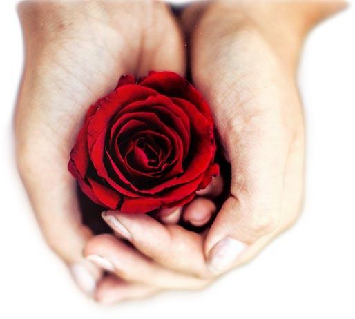 asfasleia zwhs hands with rose
