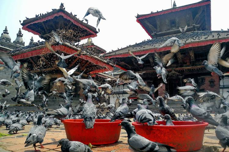 Feeding pigeons in front of Durbar Square.