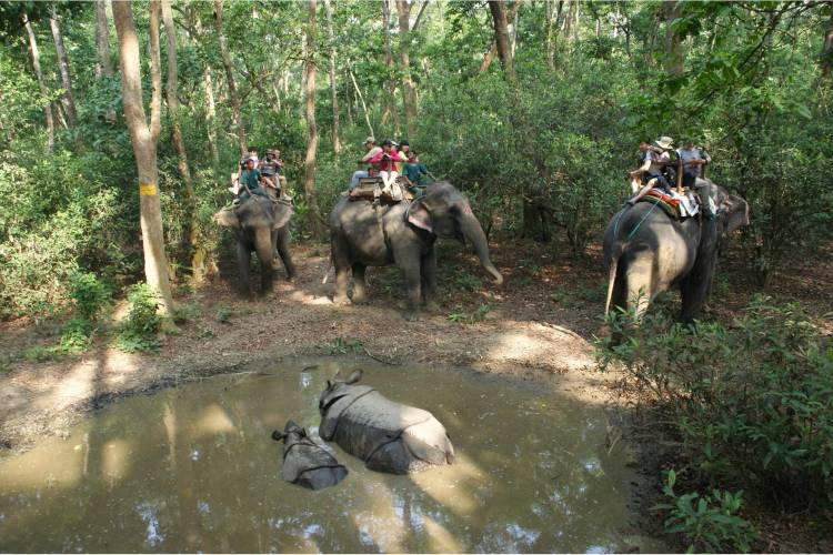Elephant Safari at Chitwan Nationalpark