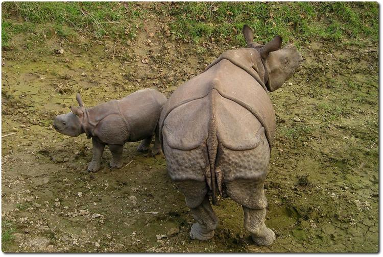 The Real Nepal Tour - Day 8 - Chitwan National Park