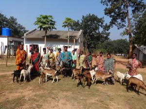 Ziegenprojekt der Ishvari Selbsthilfegruppe, Kurtumgarh (Foto: Ashakiran)