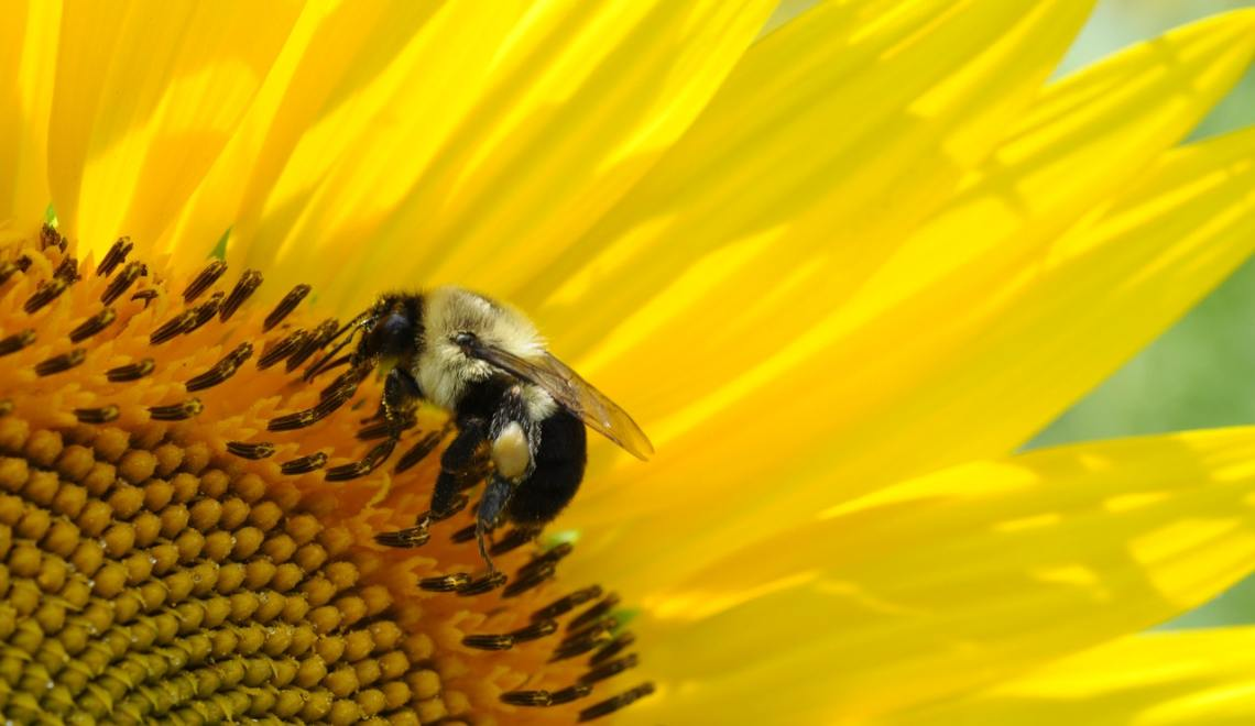 Sweet as a honeybee…
