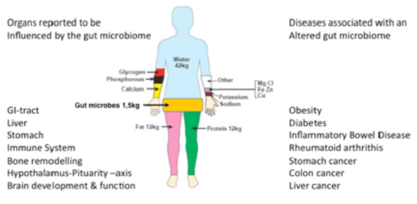organs explaining human microbiomes path