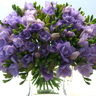 Flowers-by-Season---April-Freesia