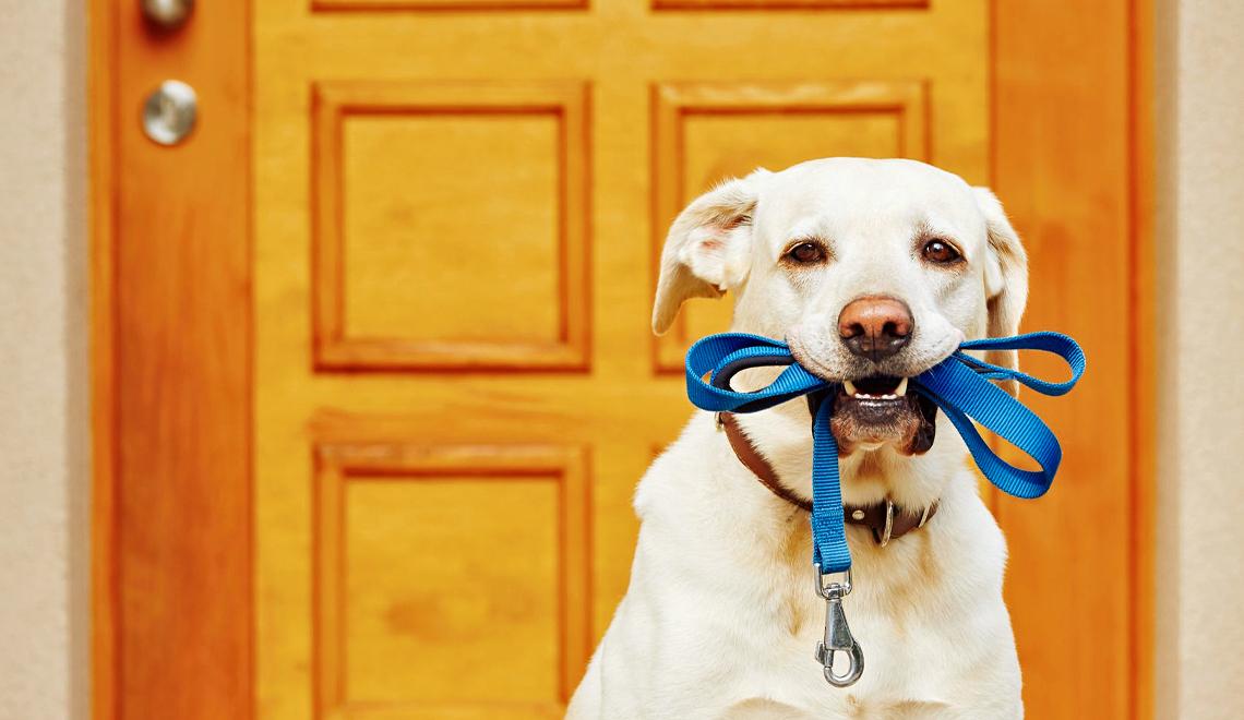 Pet Tech for Fido