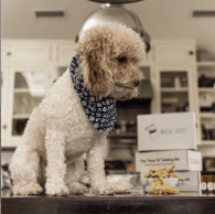 Whisk Takers dog treats