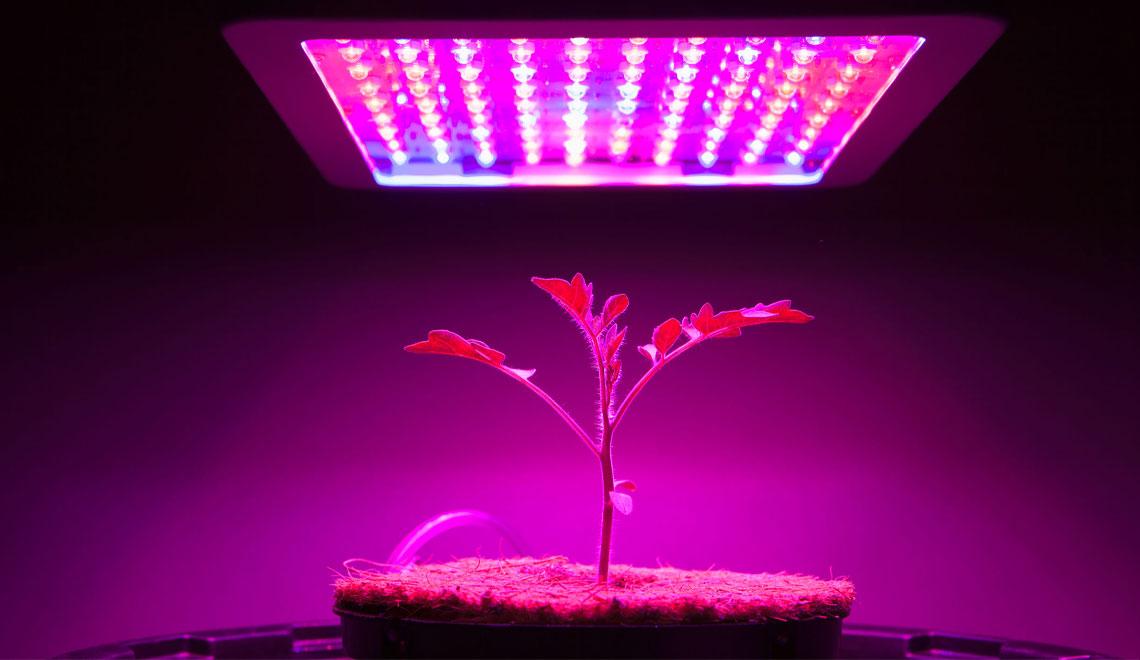 Grow Herbs, Vegetables and Flowering Plants Inside.