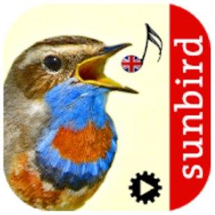 resources for birders sunbirds