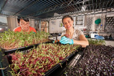 growing fresh microgreens