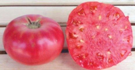 brandywine cultivar tomatoes