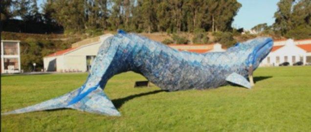 San Francisco's Crissy Field Blue Whale