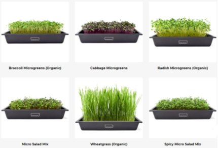 microgreen varieties available