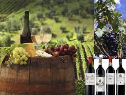 le vin en israel1