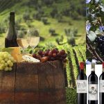 selection-vins-israel