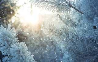 Winter scene - snow falling