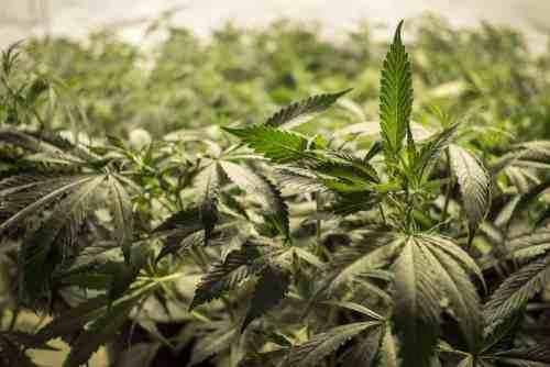 Marijuana Addiction Treatment | Asheville Recovery Center