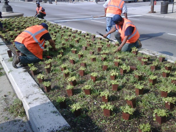 safe haven landscaping