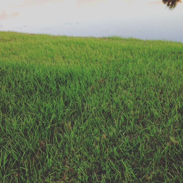 Grass Covering by Ashlee Craft